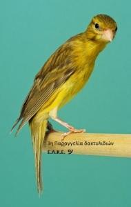 20110900003 Posture Canary - Japan Hoso